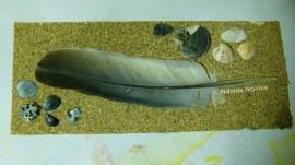 sable-plume